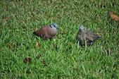 鳥類:DSC_0309.jpg