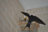 鳥類:DSC_0183.jpg