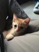 寵物:IMG_4469.JPG
