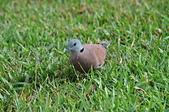 鳥類:DSC_0176.jpg