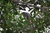 鳥類:DSC_0063.jpg