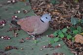 鳥類:DSC_0085.jpg