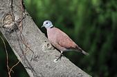 鳥類:DSC_0229.jpg