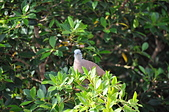 鳥類:DSC_0130.jpg