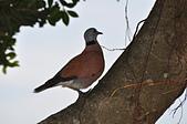 鳥類:DSC_0237.jpg