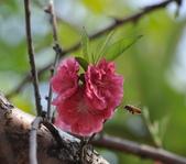 花草樹木自然風景:DSC_0442-1.jpg