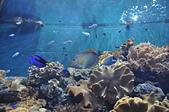 水中生物:DSC_0049.jpg