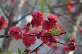 花草樹木自然風景:DSC_0472-1.jpg