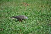 鳥類:DSC_0321.jpg