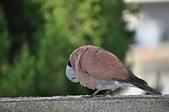 鳥類:DSC_0245.jpg