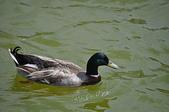水中生物:DSC_0206.jpg