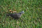 鳥類:DSC_0324.jpg