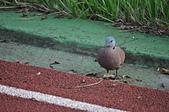 鳥類:DSC_0017.jpg