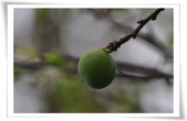 花草樹木自然風景:DSC_0154-1.jpg