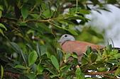 鳥類:DSC_0031.jpg