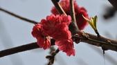 花草樹木自然風景:DSC_0445-1.jpg