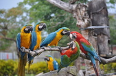 鳥類:DSC_0310.jpg