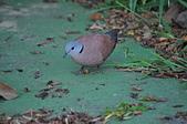 鳥類:DSC_0090.jpg