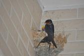 鳥類:DSC_0165.jpg