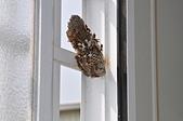 昆蟲:DSC_0012.jpg