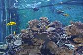 水中生物:DSC_0041.jpg