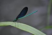 昆蟲:蓬萊溪護魚步道