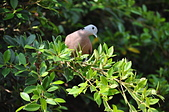 鳥類:DSC_0133.jpg