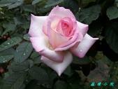 玫瑰花:1200597895_x.jpg