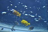 水中生物:DSC_0042.jpg