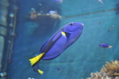 水中生物:DSC_0044.jpg