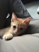 寵物:IMG_4465.JPG