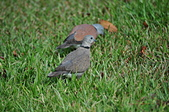 鳥類:DSC_0311.jpg
