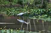 鳥類:奧萬大國家森林遊樂區