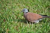 鳥類:DSC_0215.jpg