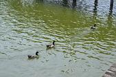 水中生物:DSC_0208.jpg