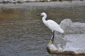 鳥類:DSC_0007-1