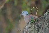 鳥類:DSC_0232.jpg