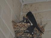 鳥類:DSC_0162.jpg