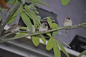 鳥類:DSC_0033.jpg