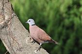 鳥類:DSC_0227.jpg