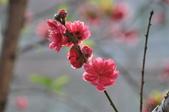 花草樹木自然風景:DSC_0447-1.jpg