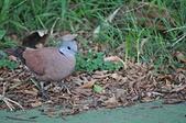 鳥類:DSC_0095.jpg