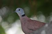 鳥類:DSC_0254.jpg