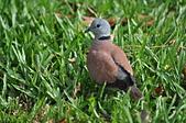 鳥類:DSC_0219.jpg