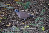 鳥類:DSC_0279.jpg