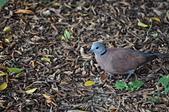 鳥類:DSC_0060.jpg