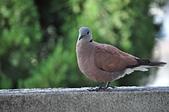 鳥類:DSC_0246.jpg