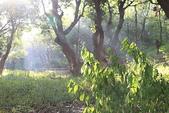 金獅湖的早晨:IMG_2763.JPG