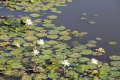 金獅湖的早晨:IMG_2764.JPG