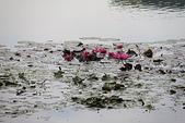 金獅湖的早晨:IMG_2781.JPG